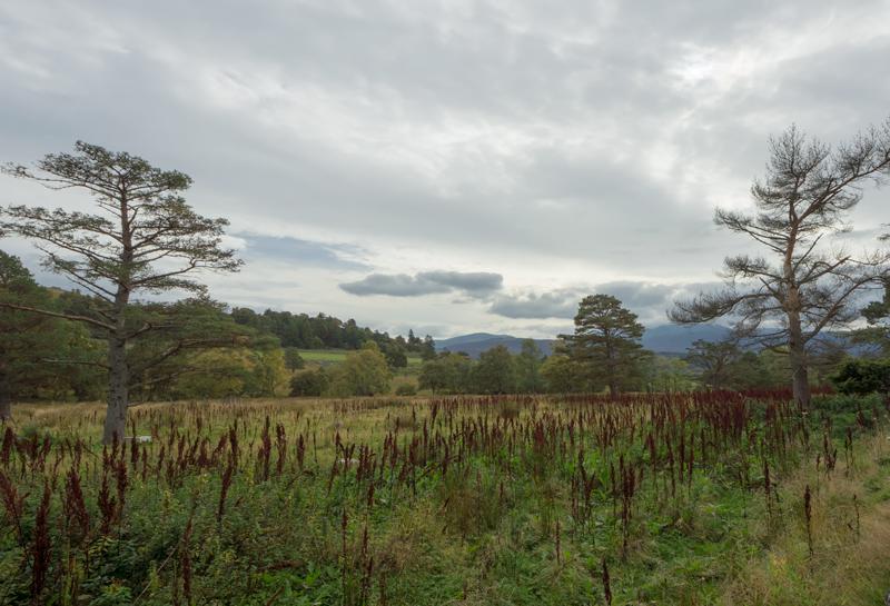 0805-Schotland40_WMP
