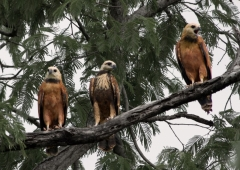 Brazilië Pantanal