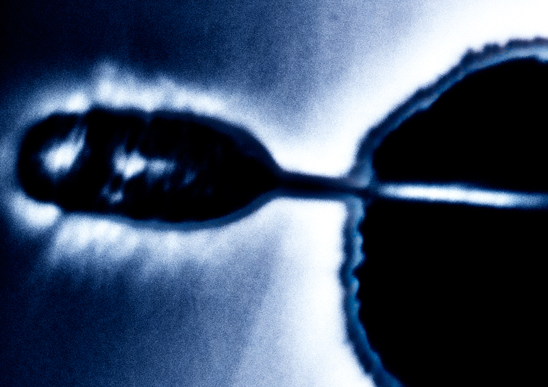 Blauw4_DSC4063.jpg